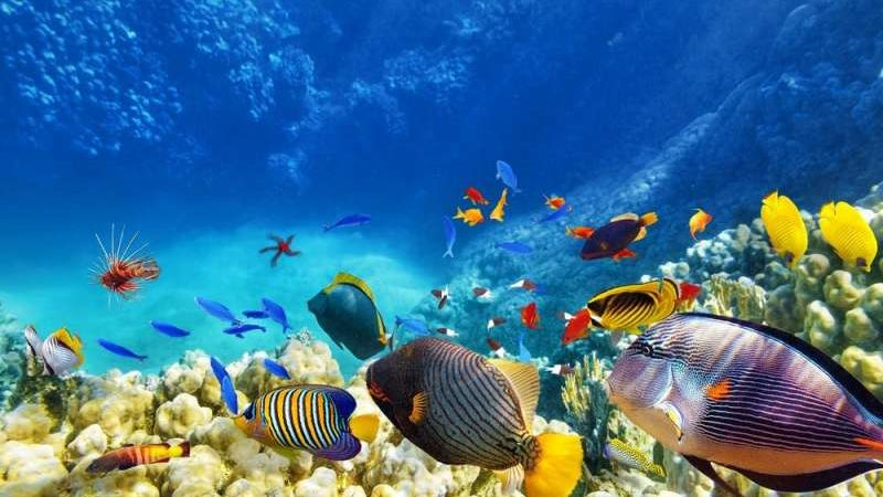 List of most popular & best deep sea diving spots in India